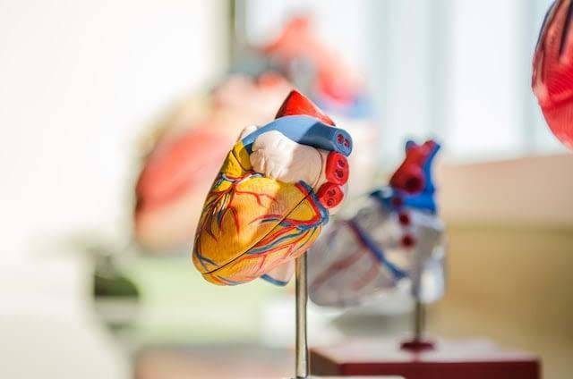 cardiovascular_2